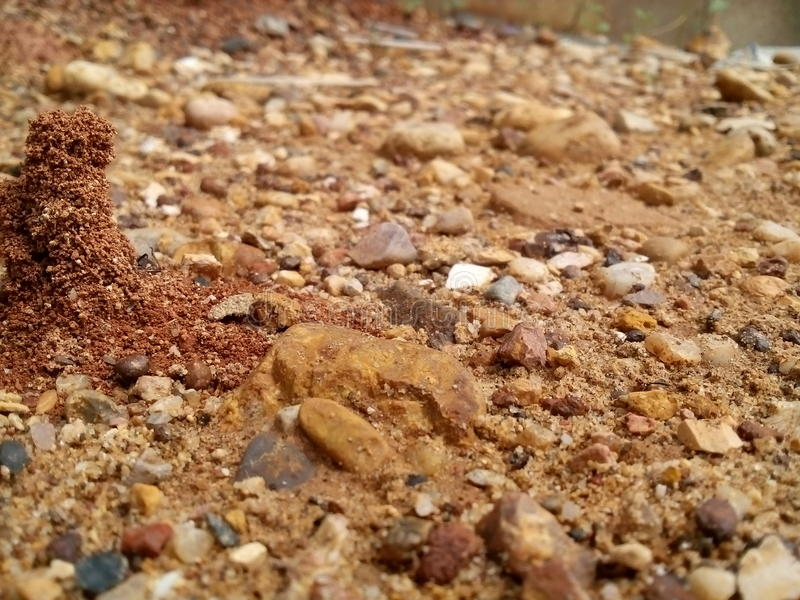 Mrówki gniazdeczko fotografia stock