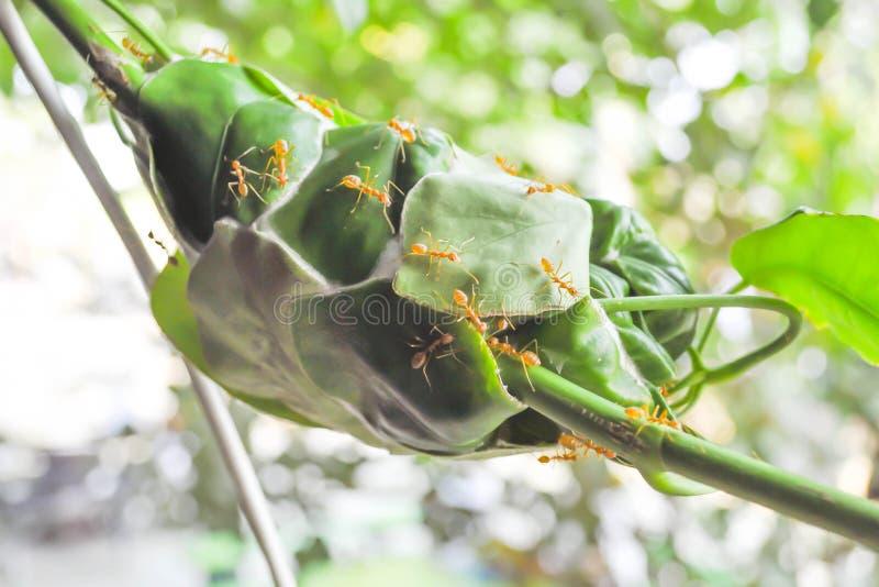 Mrówki gniazdeczko lub mrówki ulubione miejsce obraz royalty free