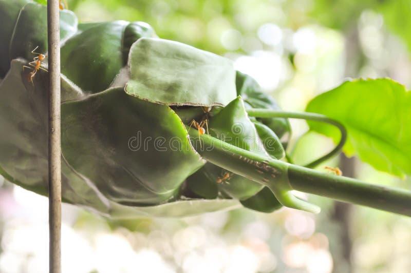 Mrówki gniazdeczko lub mrówki ulubione miejsce obrazy stock