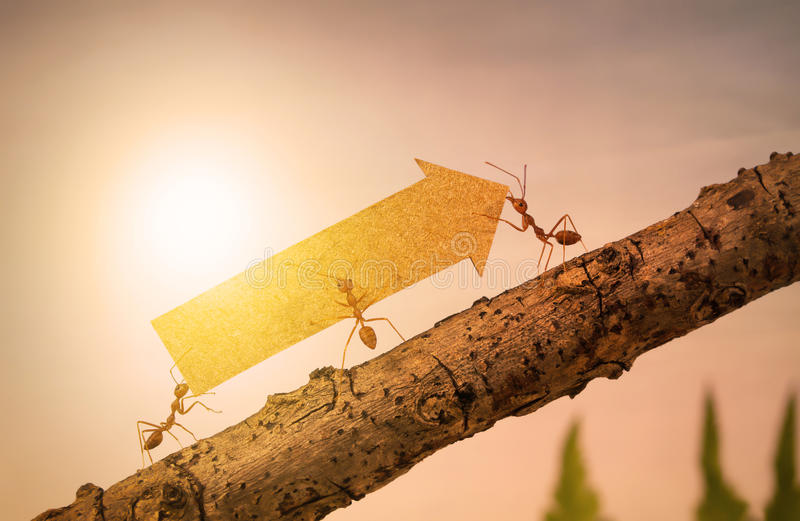 Mrówki niosą powstającą strzała dla biznesowego wykresu zdjęcia stock