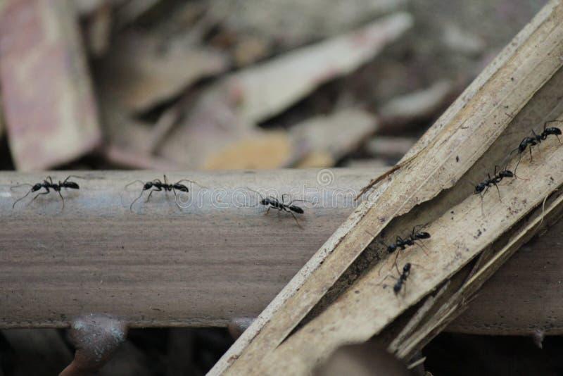 Mrówki pracują fotografia stock