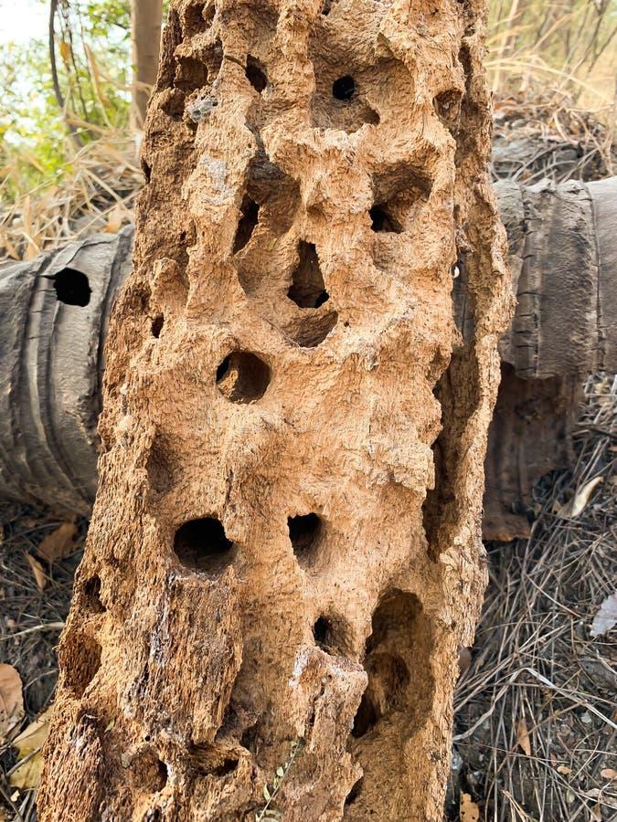 Mrówki wzgórza tło fotografia stock