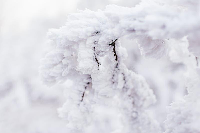 Mróz na gałęziach Twig pokryty hraarfrową mrozą,zamknij się Piękne zimowe, sezonowe środowisko naturalne Zimowy krajobraz Zamrożo fotografia stock