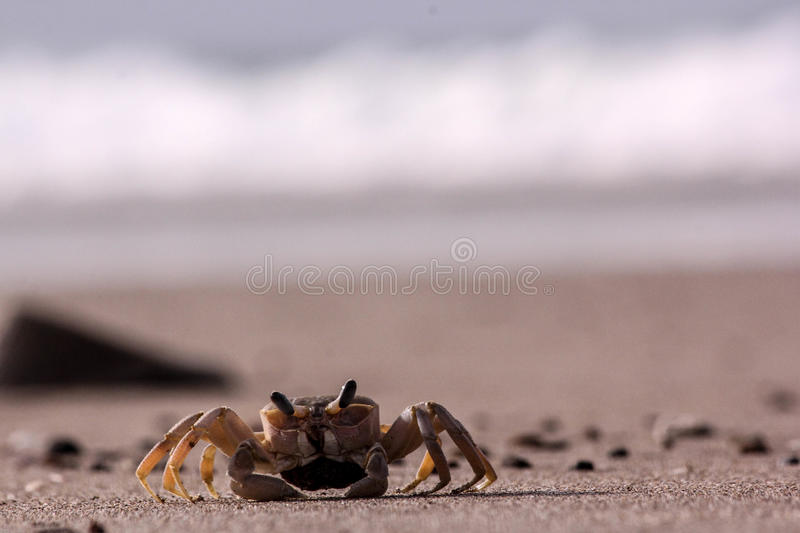Mr. crab ? royalty free stock photography