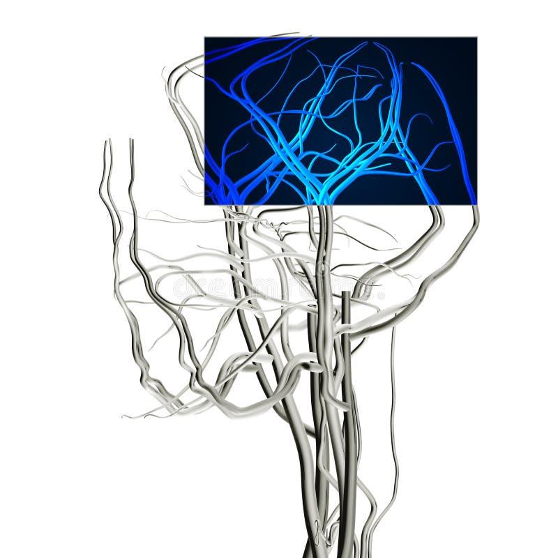 mri мозга иллюстрация вектора