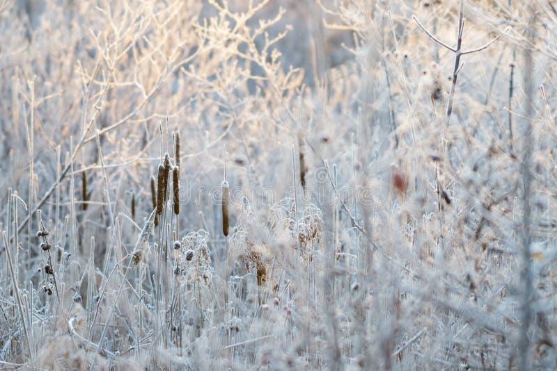Mroźny White Marsh ulistnienie obrazy royalty free