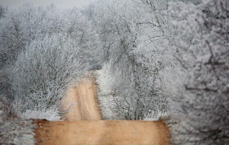 Mroźna jesień ranku wiejska droga obraz stock