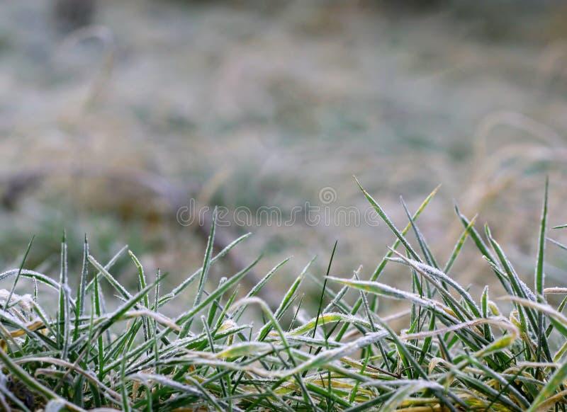 mroźna tło trawa obraz stock