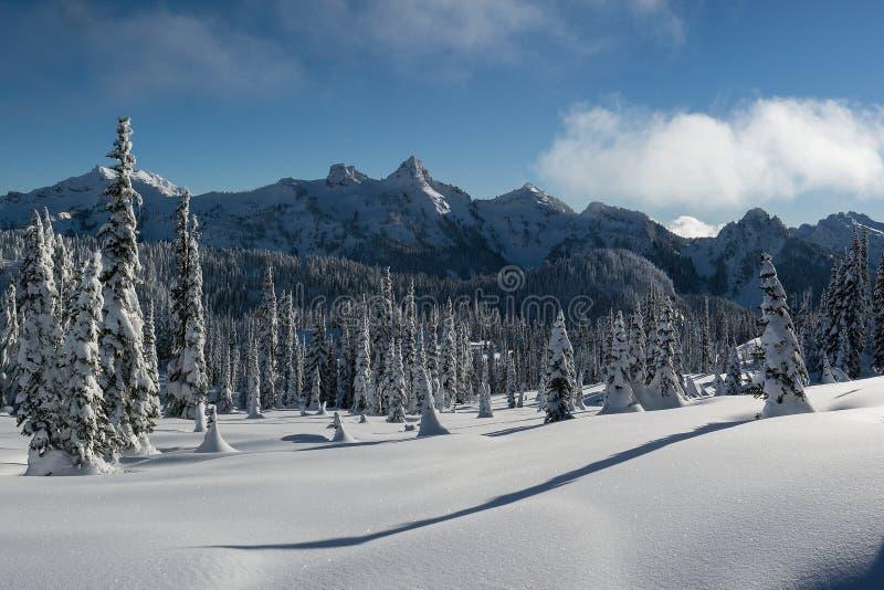 Mroźne Tatoosh góry z śniegi Zakrywającymi cieniami i drzewami Długo obraz royalty free