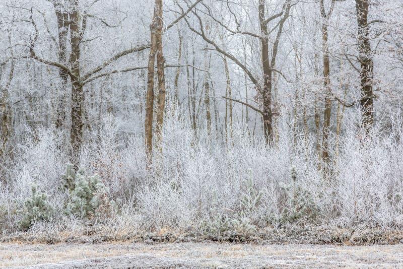Mroźni drzewa i krzaki w lasowej krawędzi fotografia royalty free