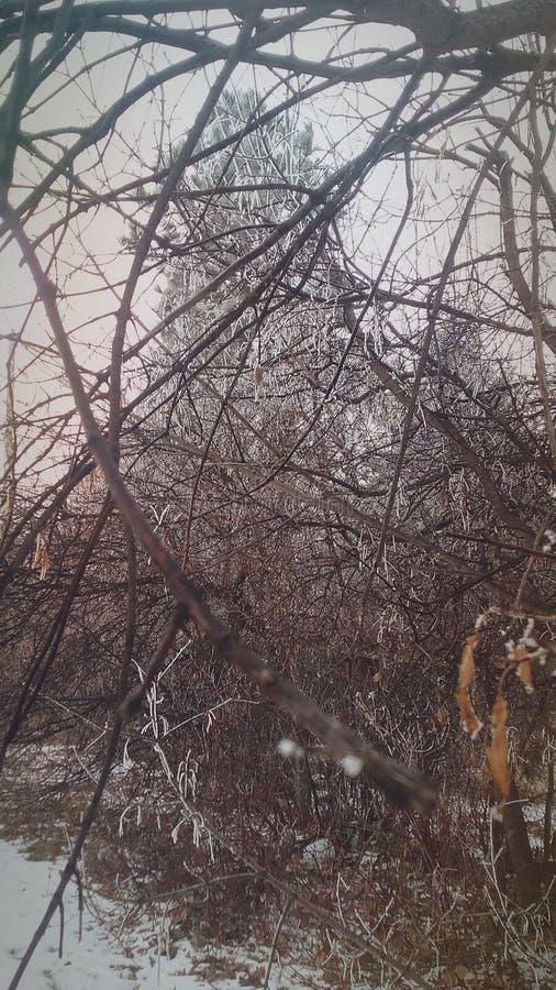 Mroźny drzewo fotografia royalty free