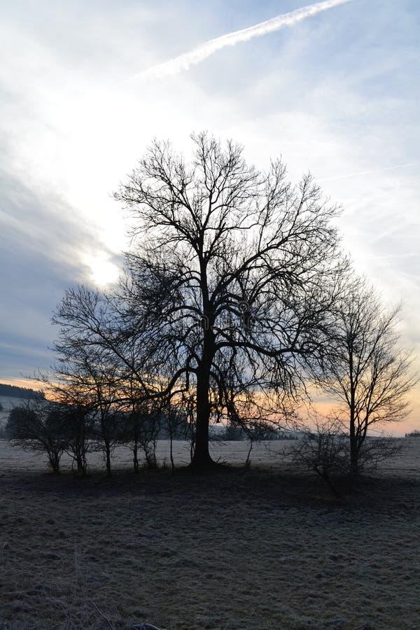 Mroźny drzewo przy wschodem słońca zdjęcie stock