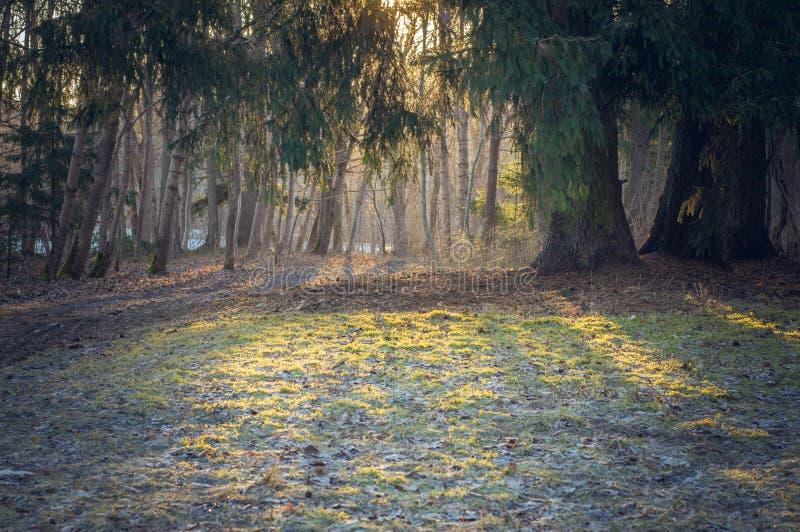 Mroźny jesień ranku tło zdjęcie stock