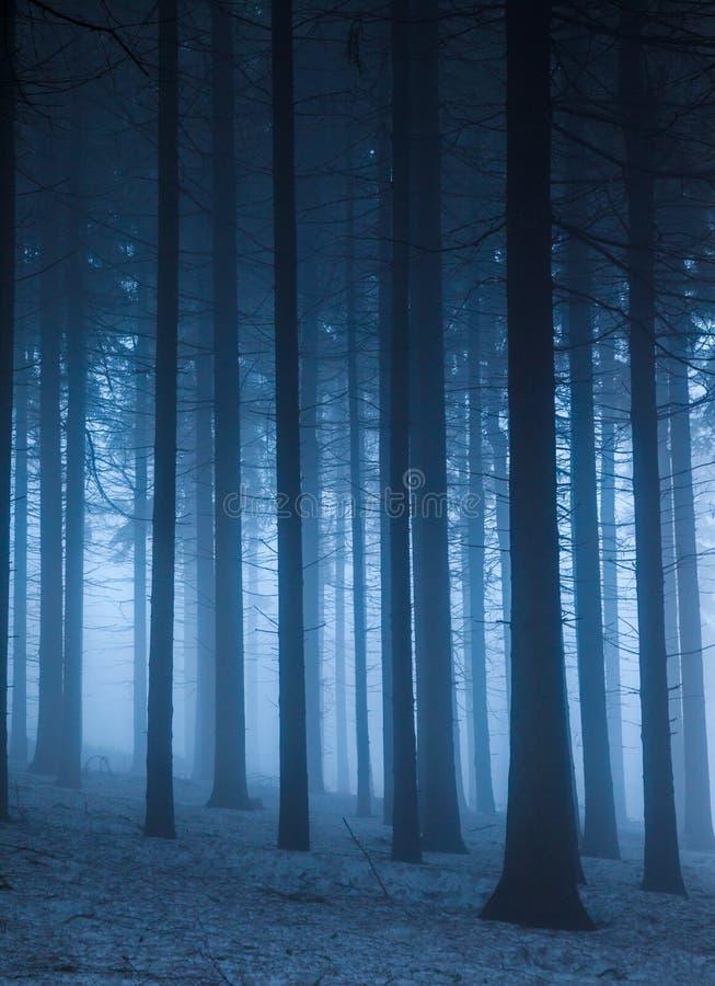 Mroźny las z śniegiem i mgłą fotografia stock