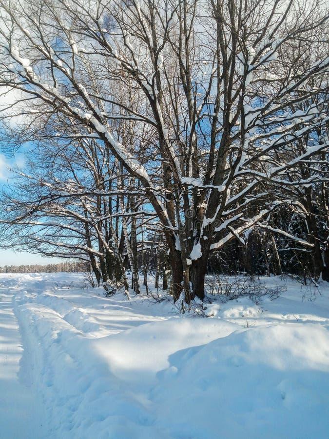 Mroźny pogodny zima dzień w śnieżnej wsi Drzewa, weared w świątecznych śnieżnych sukniach zdjęcie stock