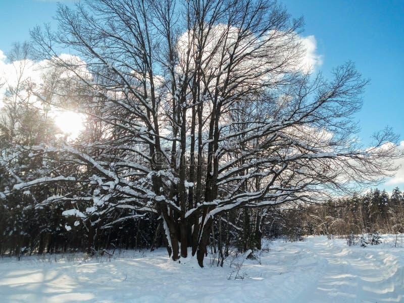 Mroźny pogodny zima dzień w śnieżnej wsi Drzewa, weared w świątecznych śnieżnych sukniach zdjęcie royalty free
