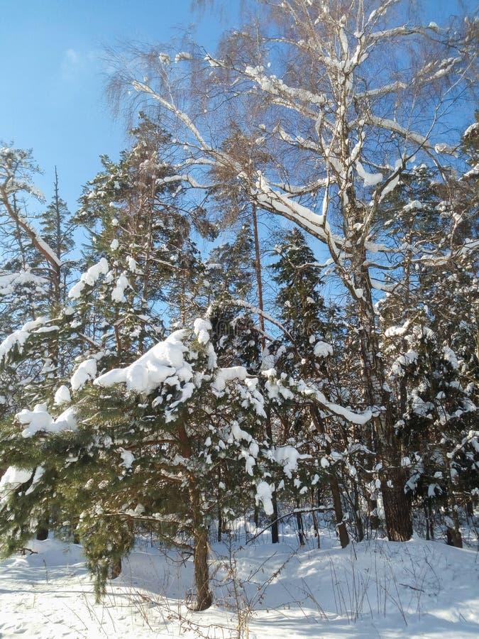Mroźny pogodny zima dzień w śnieżnej wsi Drzewa, weared w świątecznych śnieżnych sukniach zdjęcia stock