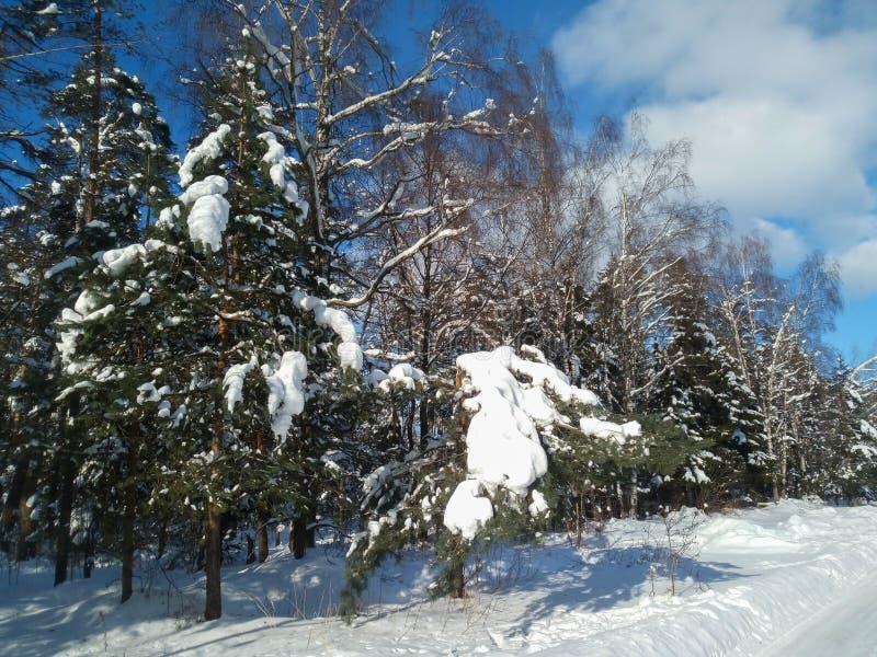 Mroźny pogodny zima dzień w śnieżnej wsi Drzewa, weared w świątecznych śnieżnych sukniach obrazy stock
