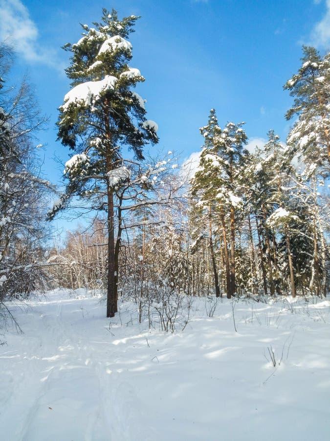 Mroźny pogodny zima dzień w śnieżnej wsi Drzewa, weared w świątecznych śnieżnych sukniach obrazy royalty free