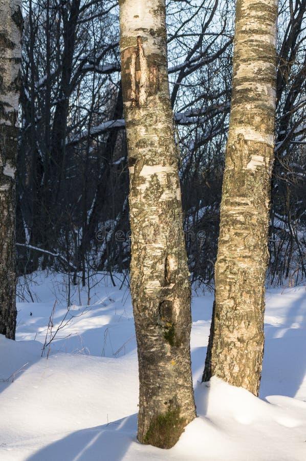 Mroźny pogodny zima dzień w zwartym drewnie obrazy royalty free