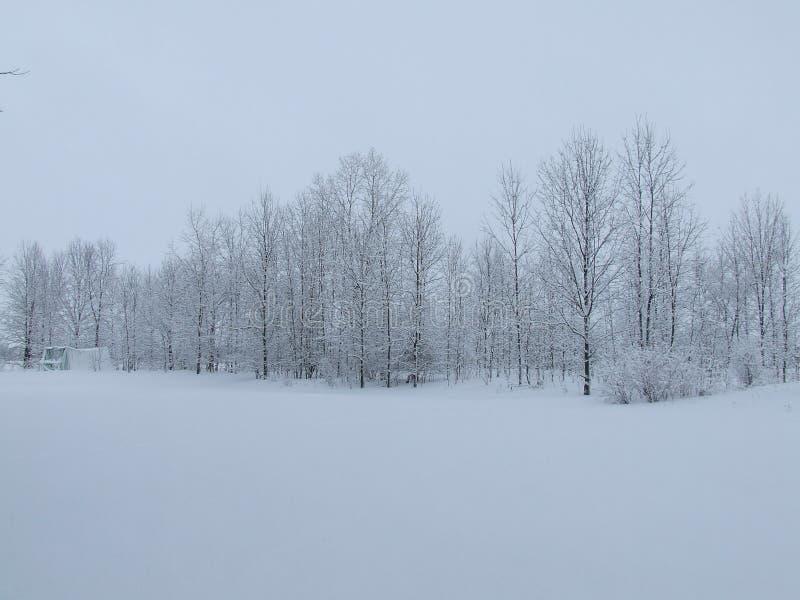 Mroźny ranek w Ontario zdjęcia stock