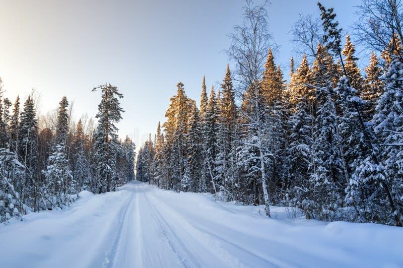 Mroźny słoneczny dzień w Urals las z wiejską drogą, Rosja obraz royalty free