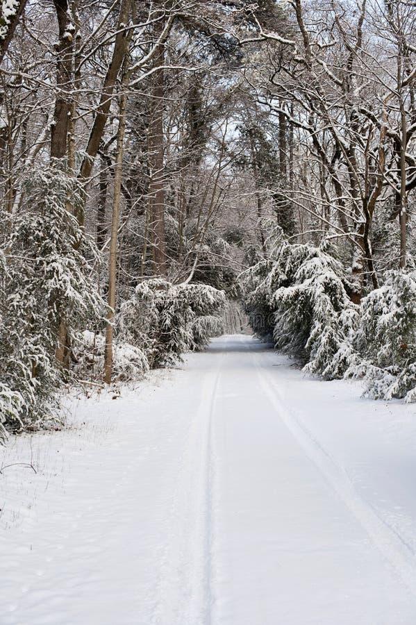 mrożona wymienionego stosowanie stabilizatora nigth drzew drogowej uliczna śniegu zima obrazy royalty free