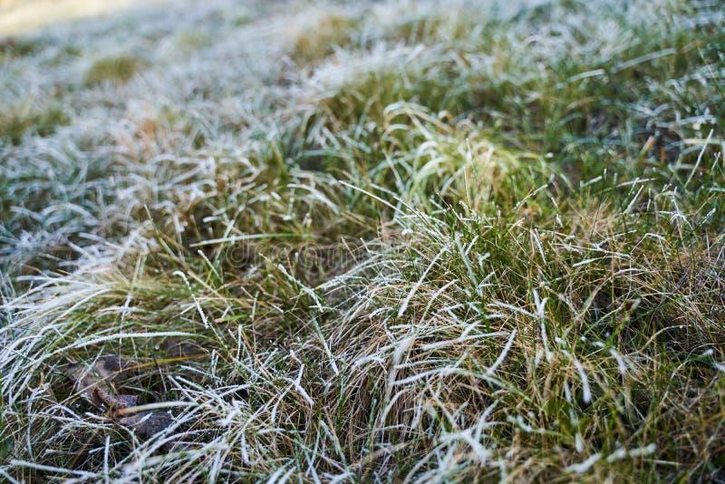 Mrożone ostrza trawy obraz royalty free