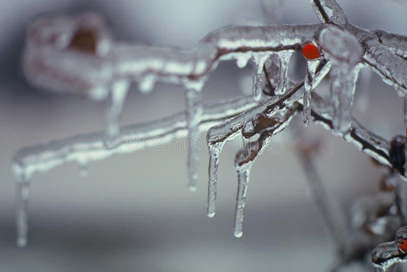Download Mrożona. zdjęcie stock. Obraz złożonej z lód, jagoda, natura - 43522