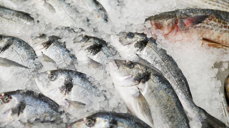 mro?ona ryba ?wie?a ryba na lodowej sprzeda?y w rynku denny jedzenie w supermarkecie Sklepu t?o zdjęcie royalty free