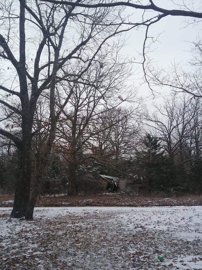 mroczny dzień niebieski oddział stać się drzew zimy śnieżną nieba obrazy royalty free