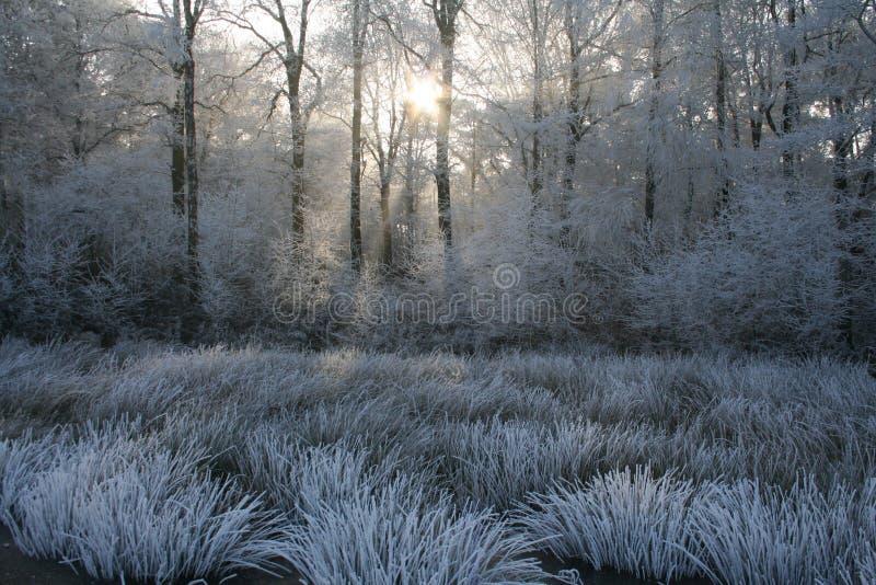 mrozowi Limburg światła słonecznego drzewa biały obrazy stock