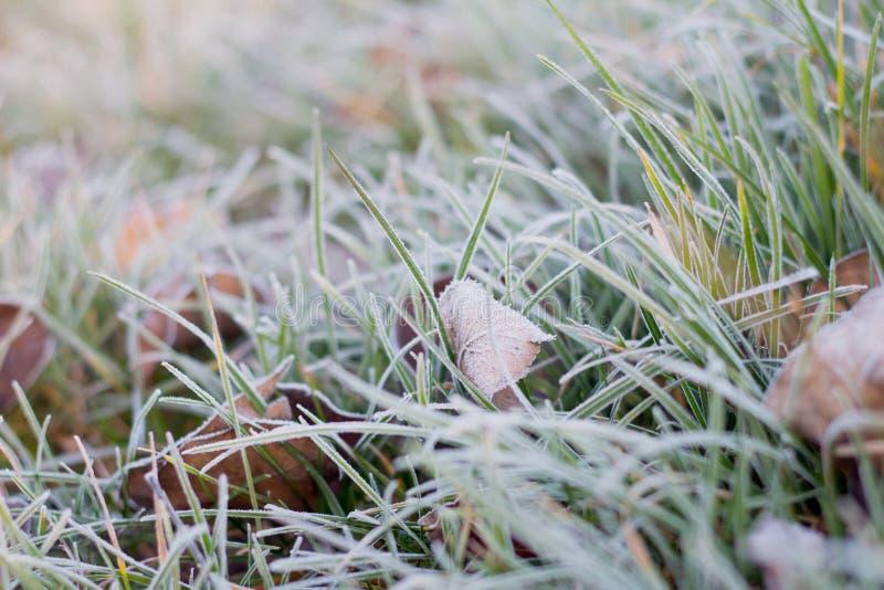 Mrozowi mrozowi sople najpierw oszronieją na trawie i liściach na gazon opóźnionej jesieni zimnym mroźnym ranku Listopad obrazy royalty free