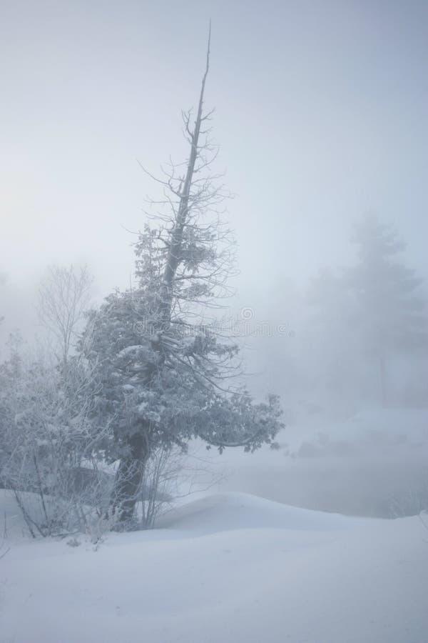 mrozowy hoar drzewo zdjęcie royalty free
