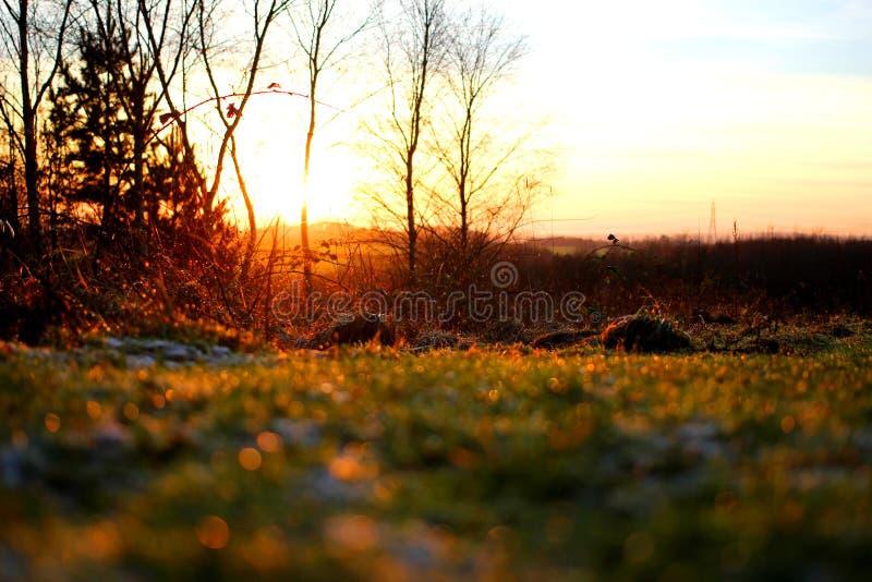 Mrozowy wschód słońca zdjęcie stock