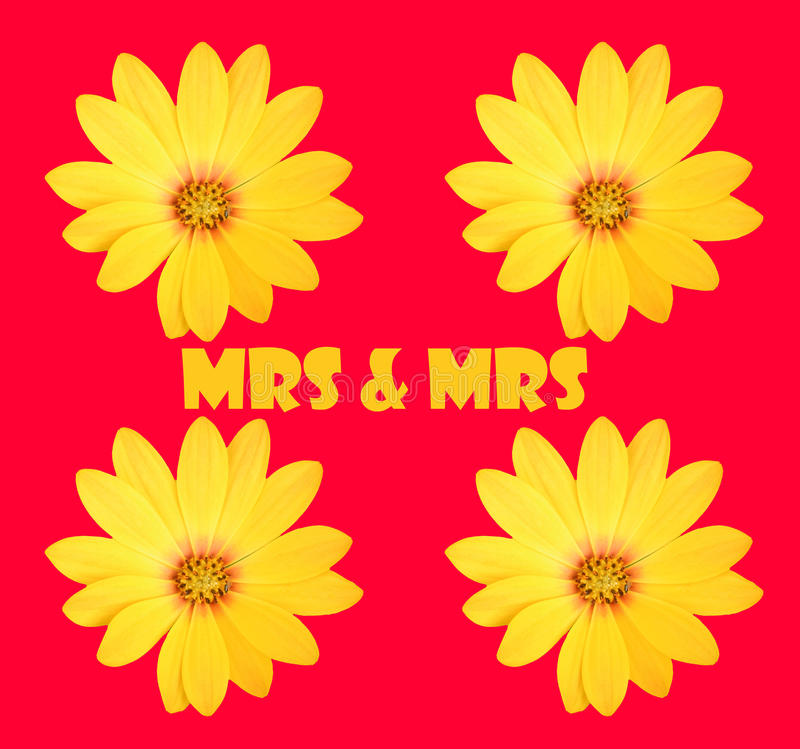 Mrs & Mrs fotografia royalty free