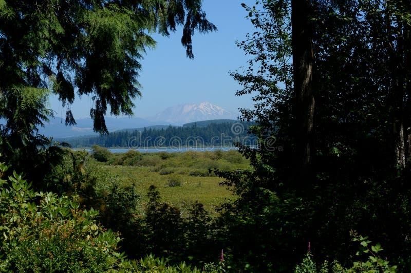 Mt圣Helens如被看见从更低的访客的中心 图库摄影