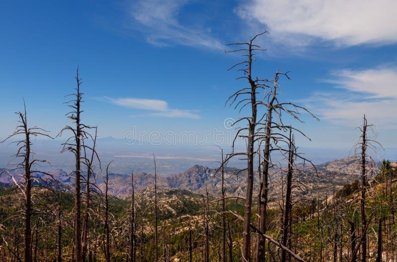 Mt Зона Lemmon, около Tucson, Аризона Национальный лес Coronado стоковые изображения rf