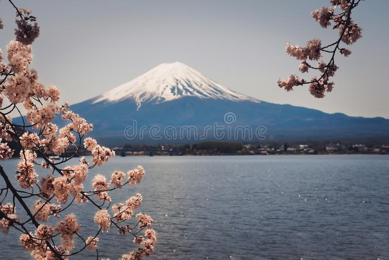Mt Фудзи окружен красивыми вишневыми цветами Это мечт назначение для путешественников к Японии стоковые фотографии rf