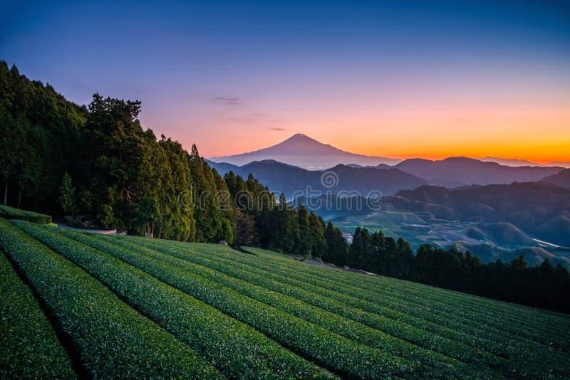 Mt Фудзи с полем зеленого чая на восходе солнца в Shizuoka, Японии стоковое фото rf