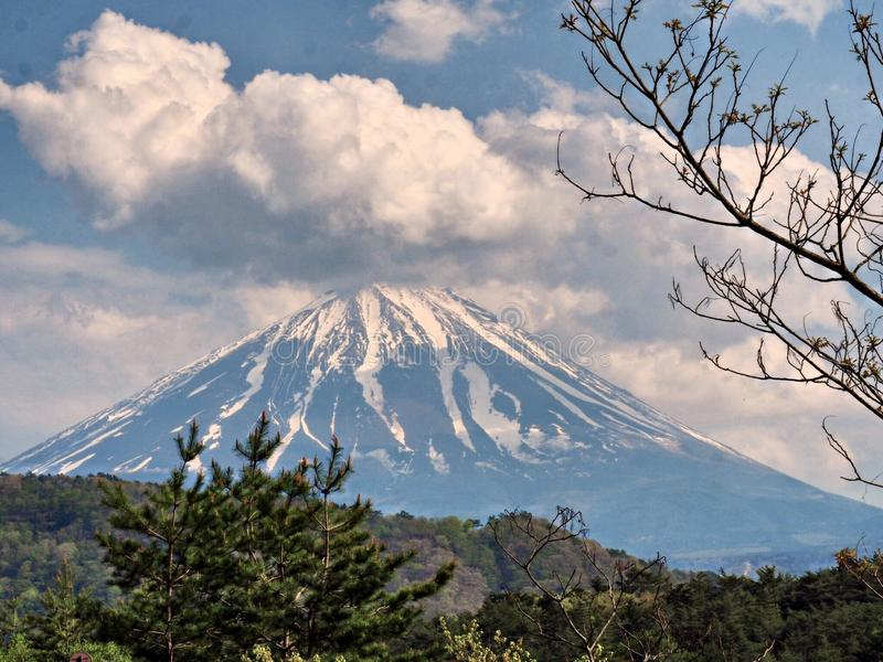 Mt 富士,与花的著名日本地标 库存图片