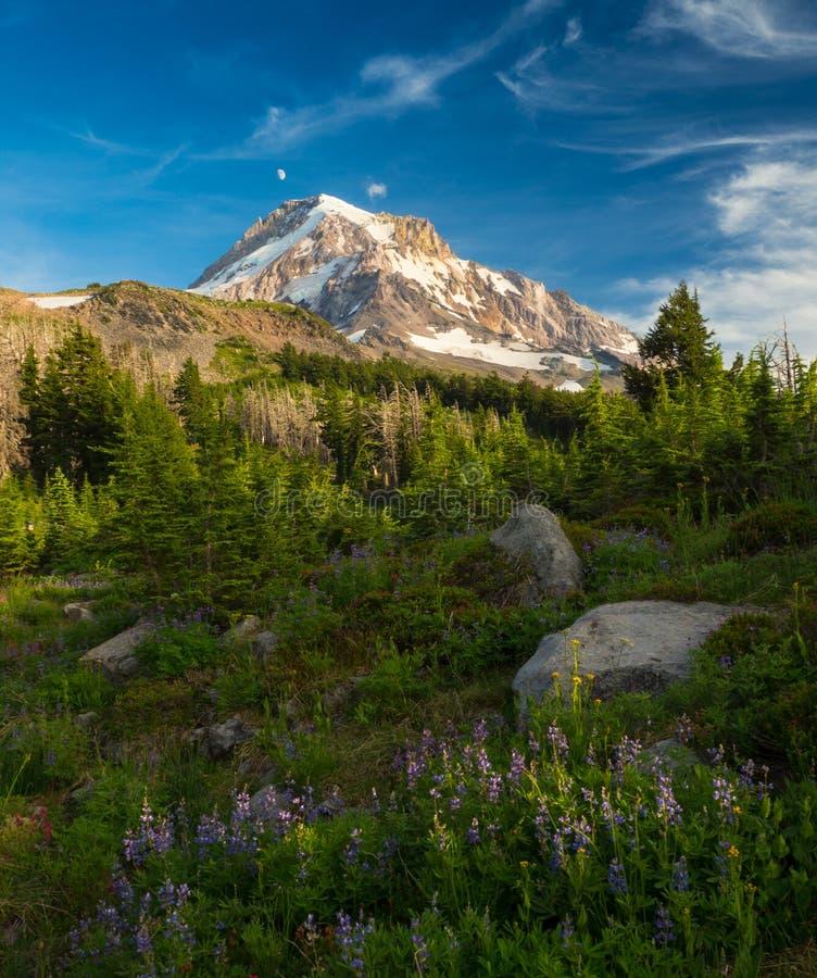 Mt 敞篷和高山草甸 图库摄影