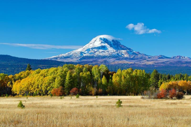 Mt Adams i osikowi drzewa w spadku obrazy royalty free