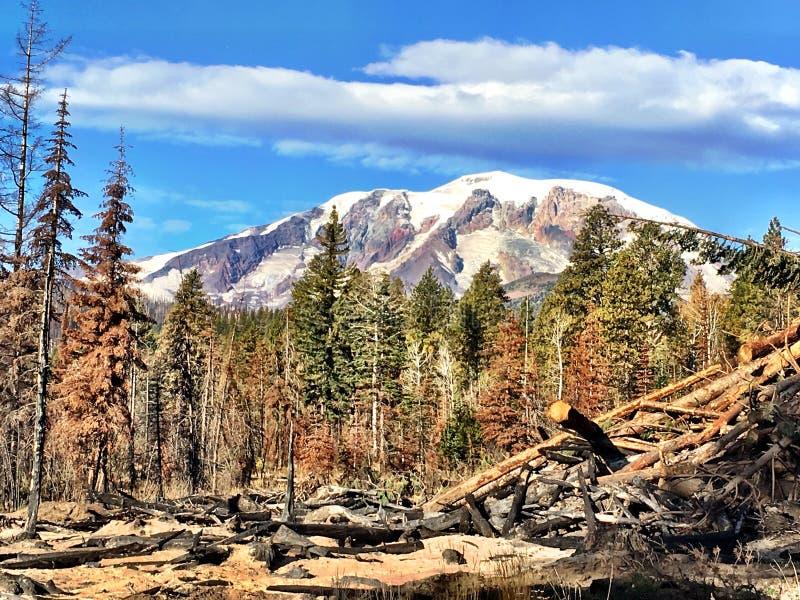 Mt Adams vom Puma-Nebenfluss-Feuer stockfotos