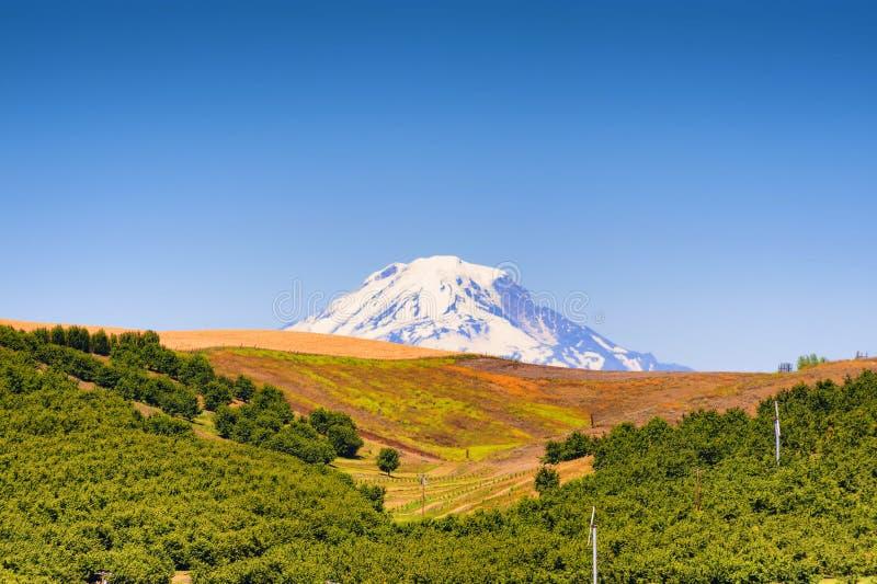 Mt Adams widzieć od Dufur Oregon zdjęcie stock