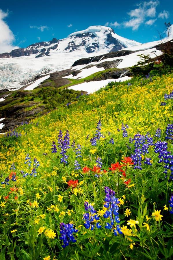 Mt. Bäcker und Wildflowers stockfoto