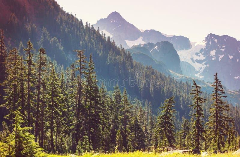 Mt.Baker Area. Mt. Baker recreation area, Washington, USA royalty free stock photos