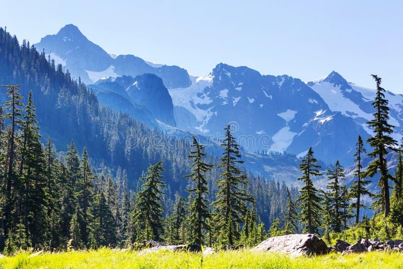 Mt Baker Area. Mt. Baker recreation area, Washington, USA royalty free stock photography