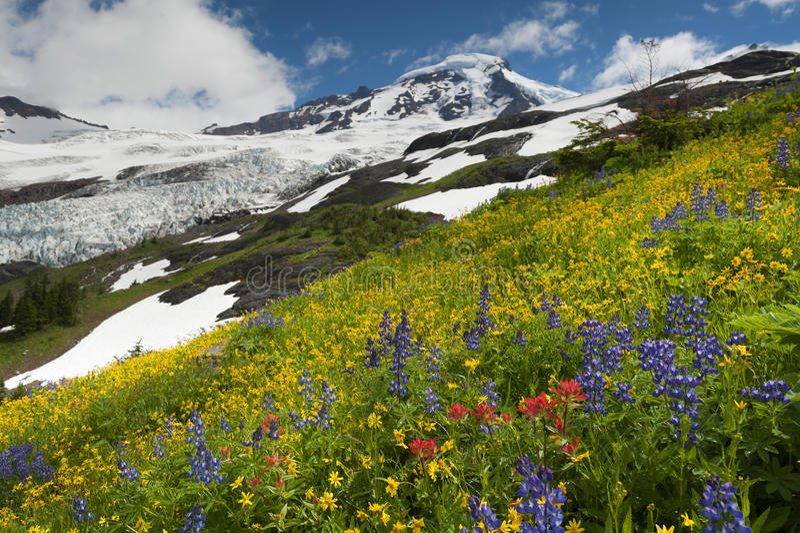 Mt. Baker Wildflowers royalty-vrije stock foto's