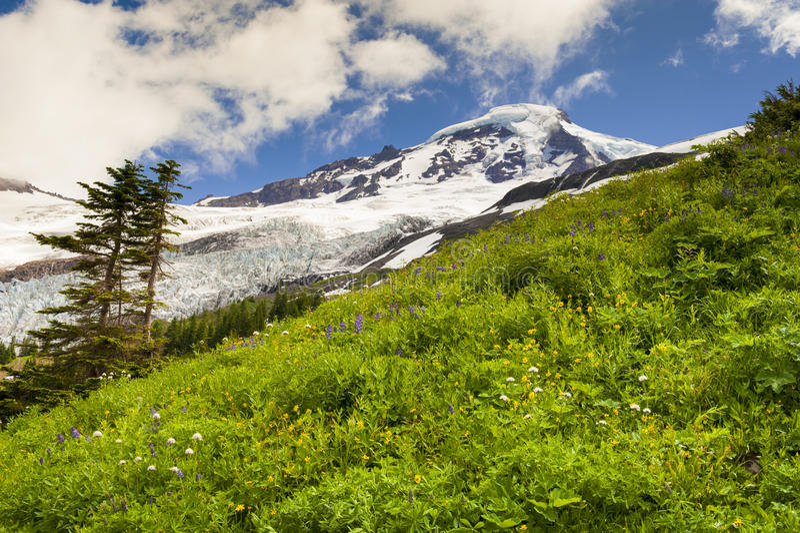 Download Mt. Baker Wildflowers stock image. Image of heliotrope - 39506409